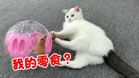 主人给猫咪带来了零食大礼包,小仓鼠却没有