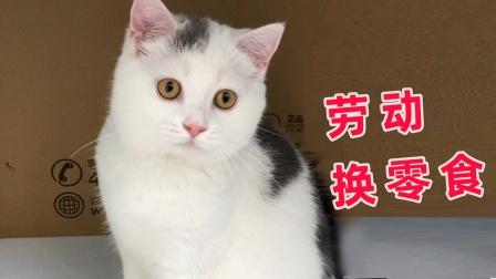 猫咪想吃零食,帮妈妈干活换取零食吃,厉害