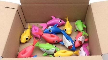 认识彩色的海洋小动物