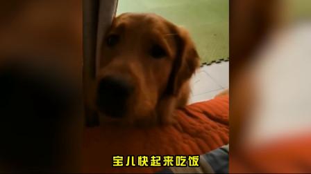 舔狗舔狗舔到最后一无所有。你看!