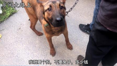 狗市一条大狼狗卖490块,直接装进狗笼子,估计这辈子见不到主人