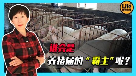 """猪肉价格持续下降,曾经的""""猪王""""跌落神坛,新的猪王将会是谁?"""