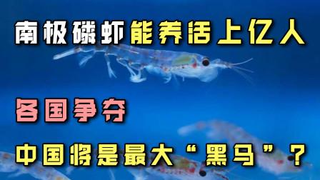 """南极磷虾养活上亿人不成问题!各国争夺,中国将是最大""""黑马""""?"""
