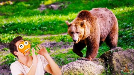转角遇到爱!棕熊闯入人类居住地,偶遇男子,不料棕熊表现有些怂