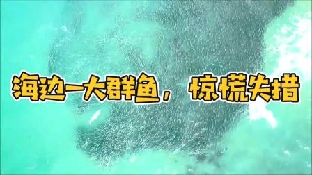 海边一大群鱼,惊慌失措!