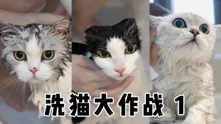 挑战一口气洗5只猫,才洗3只就累趴下,铲屎官身体被掏空!