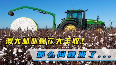 棉花大丰收!澳大利亚迎来好消息,但问题来了:该卖给谁呢?