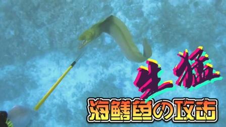 面对这种鱼要小心,它的攻击性很强!