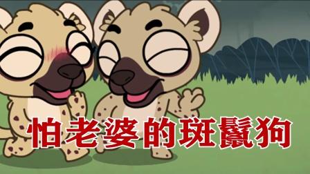 怕老婆的斑鬣狗