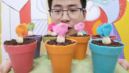 """眼镜哥吃自制""""小白菜盆栽巧克力"""",白色杆彩色叶,香醇丝滑赞"""