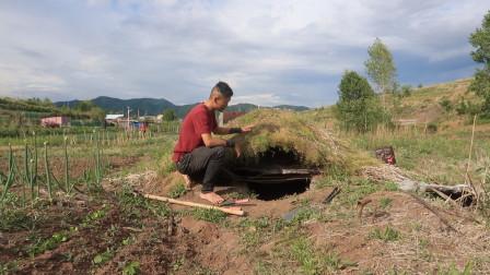 盖草屋:升级了菜园地洞,发现了北方地区适合做屋顶的植物