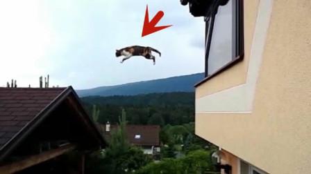 猫咪在房顶上跳跃,男子发现不对劲,将镜头放慢后大吃一惊