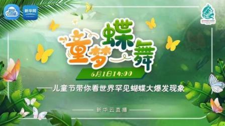 童梦蝶舞——儿童节带你看世界罕见蝴蝶大爆发现象