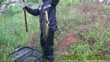 点钓黑鱼--194、【河道水草处点钓黑鱼、四】