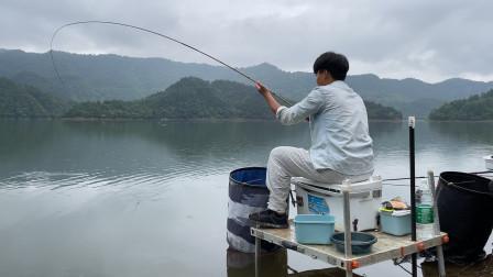 这种野钓才过瘾,下竿就是大弯弓,窝子里的鱼越钓越多