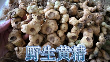 """""""黄精""""食材您了解吗?山区野生资源充足,农民常挖当菜食用"""