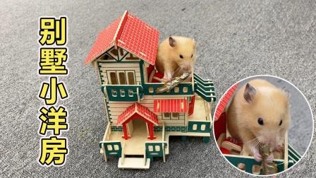 主人给小仓鼠买拼装别墅小洋房