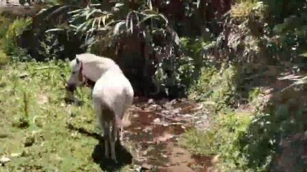 这是唐三藏的白马吗