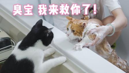 """""""猫片是用来治愈的,不是让你拿来杀狗!"""""""