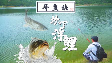 满湖没口的时候,微微一笑通过钓太阳鱼发现钓到大鲤鱼的秘密