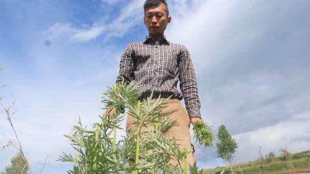 菜园的六月:我种的玉米发芽了,手动除草很有趣,看看周围情况