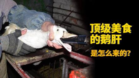 顶级美食的鹅肝,它是怎么来的呢?