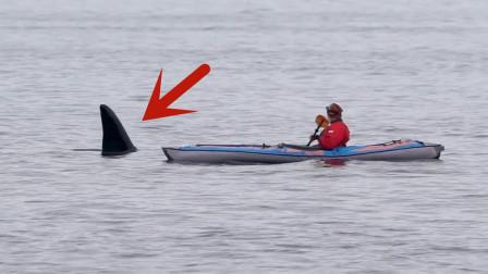 """水面突然出现一个""""背鳍"""",男子吓得脊背一凉,镜头记录惊险一幕!"""