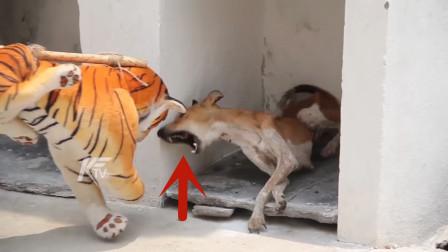 汪星人正在睡觉,男子突然恶搞,狗子吓得差点当场见了阎王!