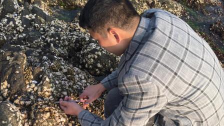 闲牛带朋友去海边寻找最美味的佛手螺,慢慢一个一个拔,太好开心了