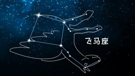 同学们,飞马座是全天第七大星座,也是六个王族星座之一
