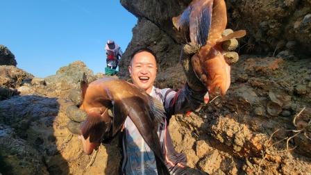 大水坑鱼获就是与众不同,光收获的石斑鱼就值千元,全程惊喜不断