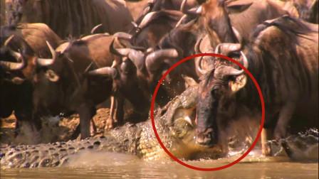 """一群角马喝水,怎料送了""""马头"""",镜头拍下精彩一幕!"""