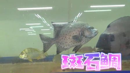 一缸海鲜,养成了观赏鱼