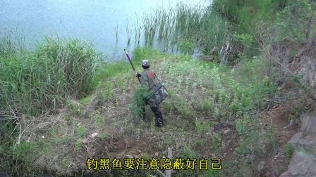 点钓黑鱼--196、【河道水草处点钓黑鱼、五】