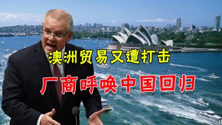 柑橘也卖不到中国了?澳洲人预感又一场风雨将至:中国快重新回来