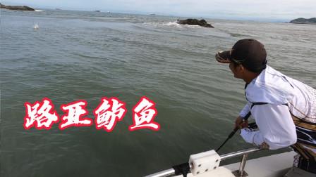 下午是路亚鲈鱼的主场,全船人都在中鱼,这场面也太刺激了