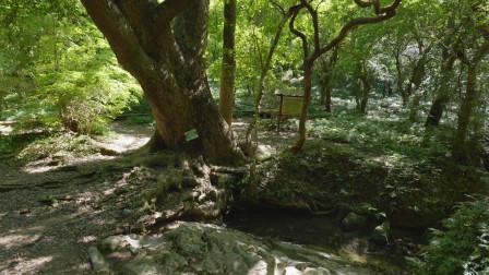 湖南永州千年香樟泉,原来还有这样的民间故事,这地方太有灵气了