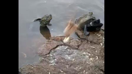 《喂鸟喂来了龟》