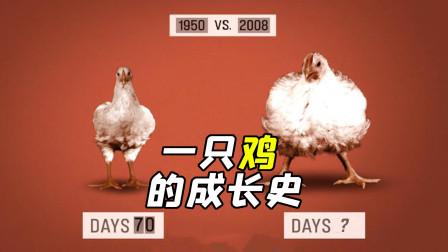 全黑环境,密闭空间,一只鸡长大仅需48天,揭露餐饮内幕的纪录片