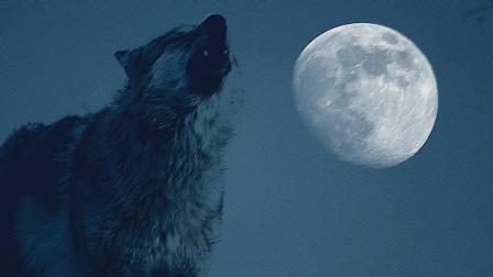 《重返狼群》幕后故事-狼山之夜