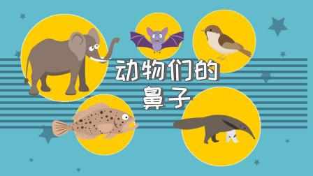 不同动物都拥有不同的鼻子,你了解哪些动物的鼻子呢
