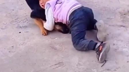 二岁小孩治服大狼狗,是人太厉害还是狗太怂