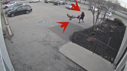 """大鹅疯狂攻击女子,小伙看不下去了,直接""""开车撞""""了过去!"""