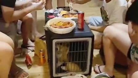 老师晚上吃宵夜用狗笼当桌子 狗子:你们是真的狗啊