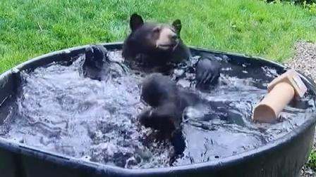 夏天这么热,黑熊都知道该泡澡了