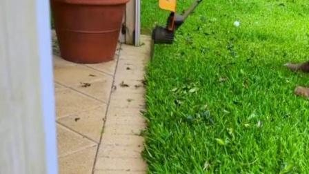 大爷这工具把草坪修整的很干净,太解压了