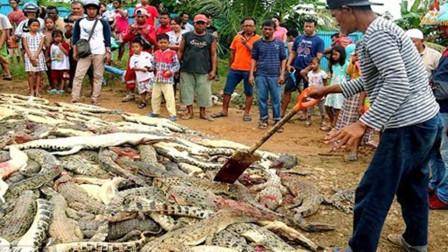 鳄鱼频频闯入村庄,被逼疯的村民,不休不眠一天怒屠300条鳄鱼!