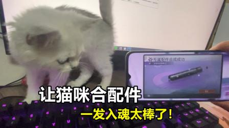 明日之后:让猫咪合配件,6阶紫色枪口一发入魂!