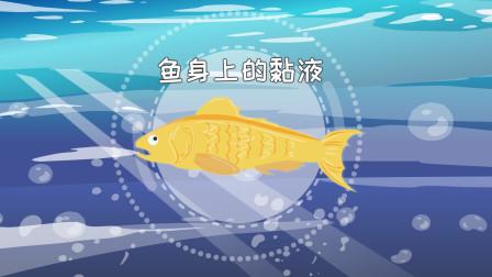 为什么鱼身上有一层粘粘的黏液