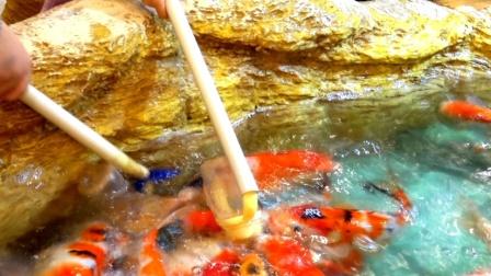 男子在四级考场外喂鱼酷似海王,却被考生当锦鲤